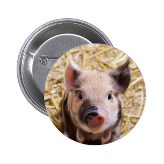 Cute Pic of a baby Pig 6 Cm Round Badge