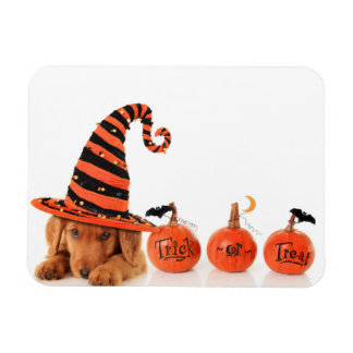Cute Puppy Wearing A Halloween Witch Hat Rectangular Photo Magnet
