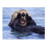 Cute Sea Otter | Alaska, USA Postcard