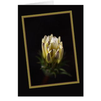 Daisy In Love Greeting Card