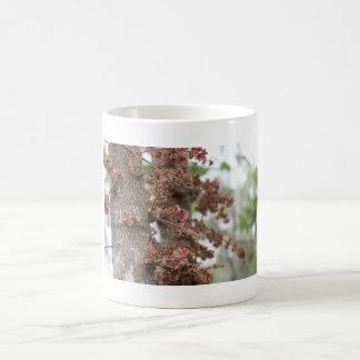 davidson plum tree in flower basic white mug