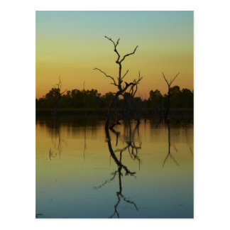 Dead trees reflected in Lily Creek Lagoon, dawn Postcard