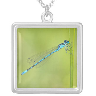 Dragonfly, damselfly necklace, gift idea square pendant necklace