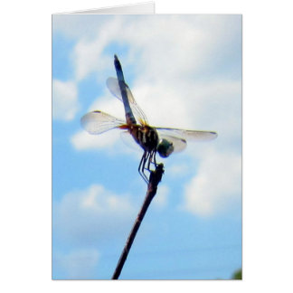 Dragonfly ~ Prepare for Take-off Greeting Card