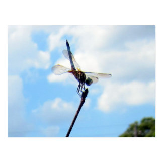 Dragonfly ~ Prepare for Take-off Postcard