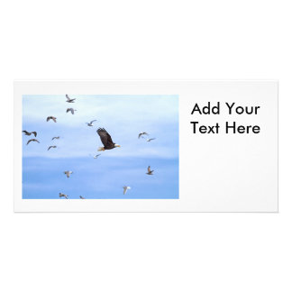 Eagle and Seagulls Flying Picture Card