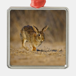 Eastern cottontail rabbit hopping Silver-Colored square decoration