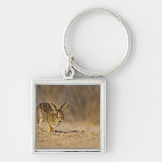 Eastern cottontail rabbit hopping Silver-Colored square key ring