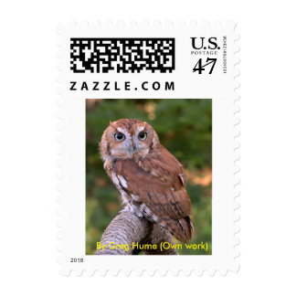 Eastern Screech Owl Stamps
