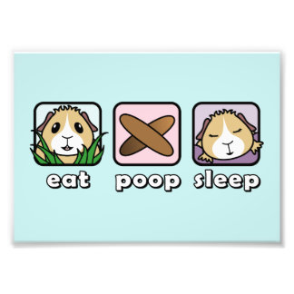 Eat Poop Sleep Guinea Pig Print (Frames Available) Art Photo