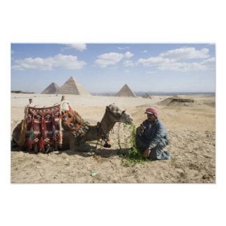 Egypt, Giza. Native man feeds his camel in Poster