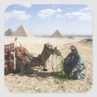Egypt, Giza. Native man feeds his camel in Square Sticker