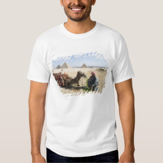 Egypt, Giza. Native man feeds his camel in T-shirt