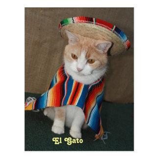 El Gato Bubba Postcard