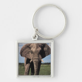 Elephant young male Silver-Colored square key ring