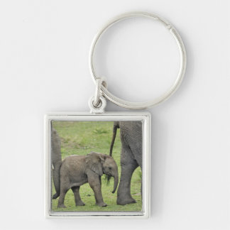 Female African Elephant with baby, Loxodonta 3 Silver-Colored Square Key Ring