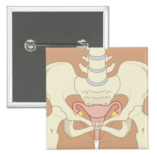 Female Reproductive System 3 15 Cm Square Badge