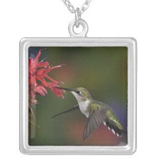Female Ruby-throated Hummingbird feeding on Square Pendant Necklace