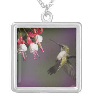Female Ruby throated Hummingbird in flight. Square Pendant Necklace
