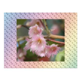 Flora 4 postcard