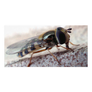 fly Macro Personalized Photo Card