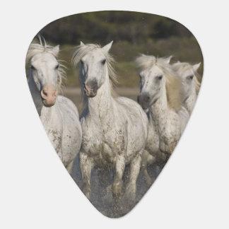 France, Camargue. Horses run through the 2 Guitar Pick