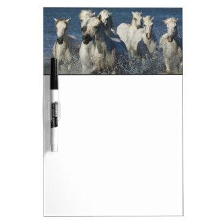 France, Camargue. Horses run through the estuary 4 Dry-Erase Boards
