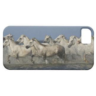 France, Camargue. Horses run through the estuary 5 Case For The iPhone 5