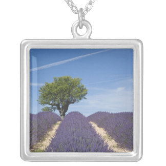 France, Provence. Rows of lavender in bloom. 4 Square Pendant Necklace