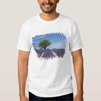 France, Provence. Rows of lavender in bloom. 4 T-shirt