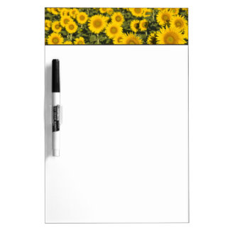France, Provence, Valensole. Field of Dry Erase Board
