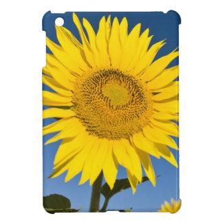 France, Provence, Valensole. Sunflowers stand iPad Mini Case