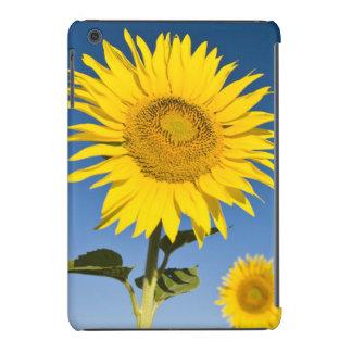 France, Provence, Valensole. Sunflowers stand iPad Mini Retina Case