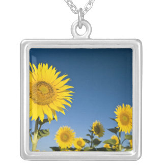 France, Provence, Valensole. Sunflowers stand Square Pendant Necklace