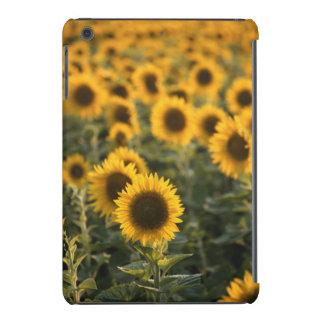 France, Vaucluse, sunflowers field iPad Mini Retina Covers