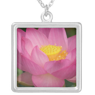 Franklin NC, Perry's Water Garden, Lotus 2 Square Pendant Necklace