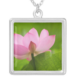 Franklin NC, Perry's Water Garden, Lotus Square Pendant Necklace