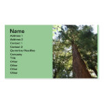 Giant Redwood Sequoia Treetop Pack Of Standard Business Cards