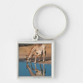 Giraffe (Giraffa Camelopardalis) Drinking Silver-Colored Square Key Ring