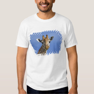 Giraffe, Giraffa camelopardalis tippelskirchi, T Shirt