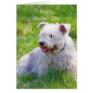 Glen of Imaal Terrier dog mother's day card