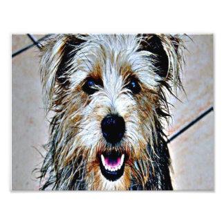 Glen of Imaal Terrier Pop Art Photo
