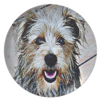 Glen of Imaal Terrier Pop Art Plate