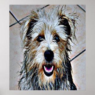 Glen of Imaal Terrier Pop Art Poster