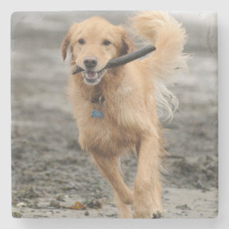 Golden Retriever Running With  Stick In Mouth Stone Beverage Coaster
