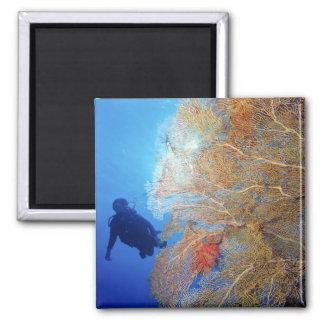 Gorgonian sea fan, Subergorgia mollis, with Square Magnet