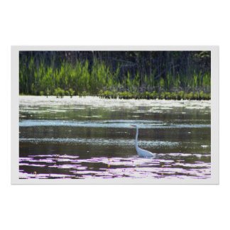 Great Egret Photo Poster