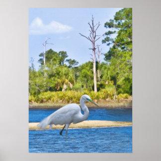 Great Egret Wading Poster