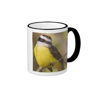 Great Kiskadee Pitangus sulphuratus) adult Ringer Mug