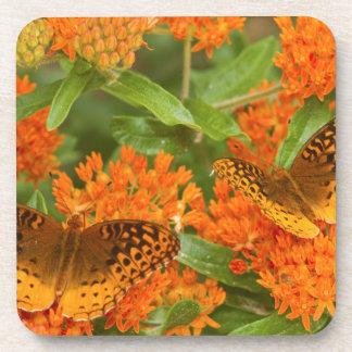 Great Spangled Fritillaries on Butterfly Milkweed Coaster